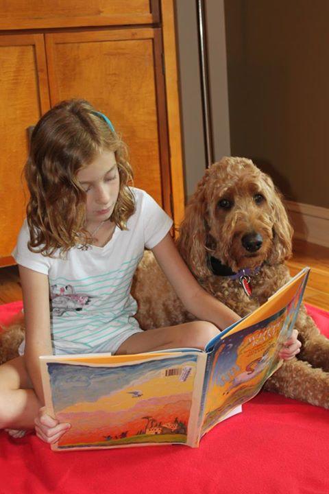 daisy therapy dog